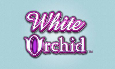 white orchid tragamonedas