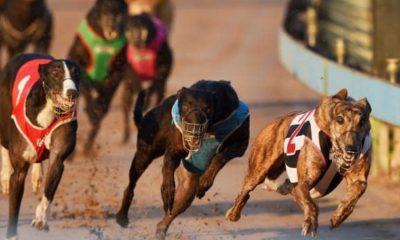 Jugar al tragamonedas Bet On Dogs