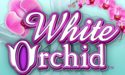 Jugar al tragamonedas White Orchid