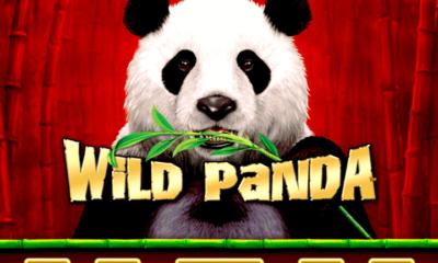 Jugar al tragamonedas Wild Panda
